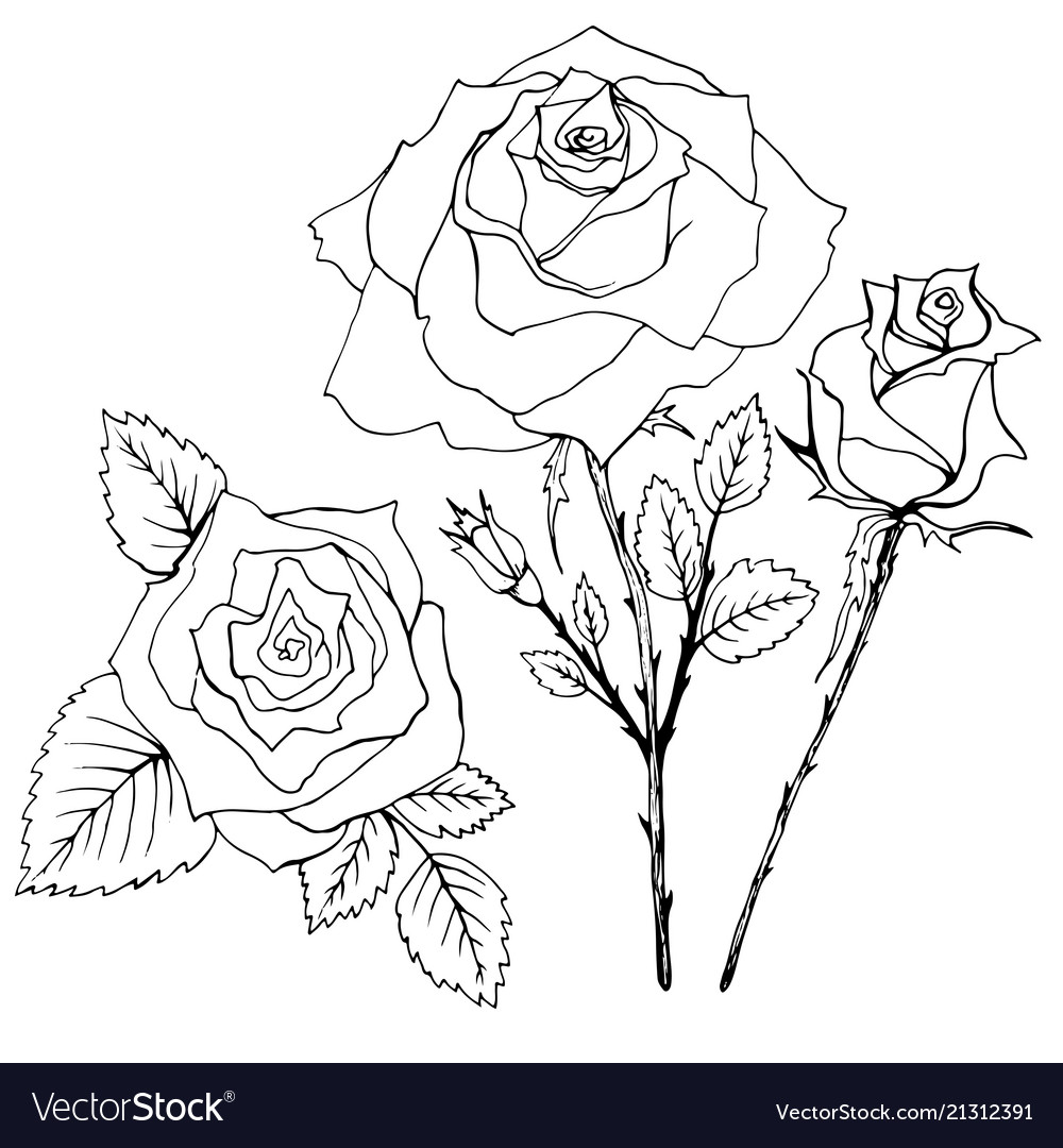 Coloring book flowers rouse