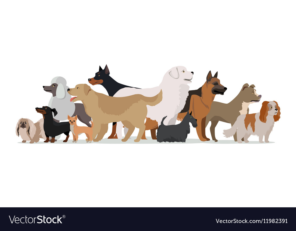 Group of Different Breeds Dogs
