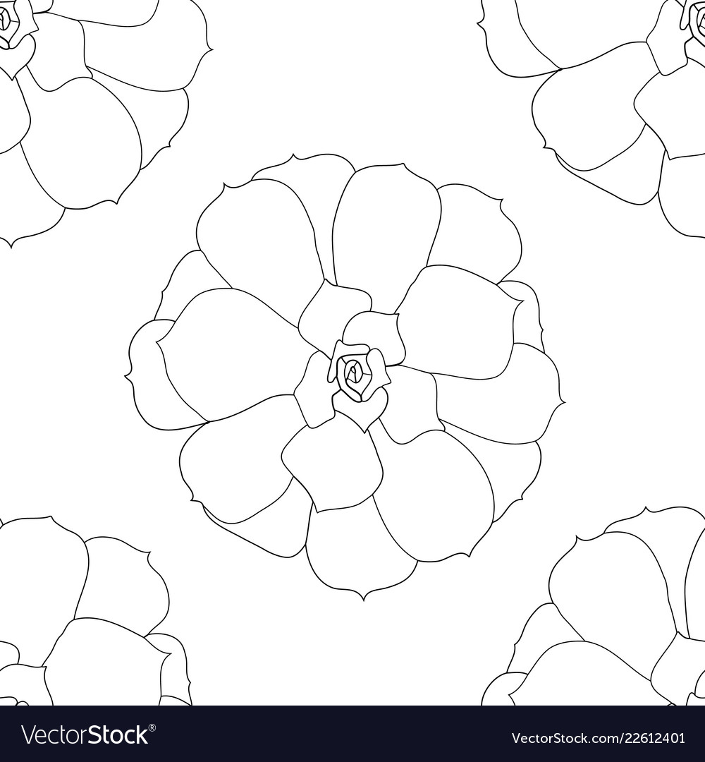 Succulent plant seamless pattern echeveria hand