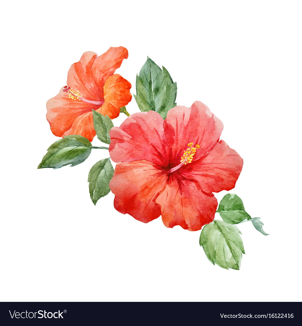 Watercolor Tropical Hibiscus Flower Royalty Free Vector
