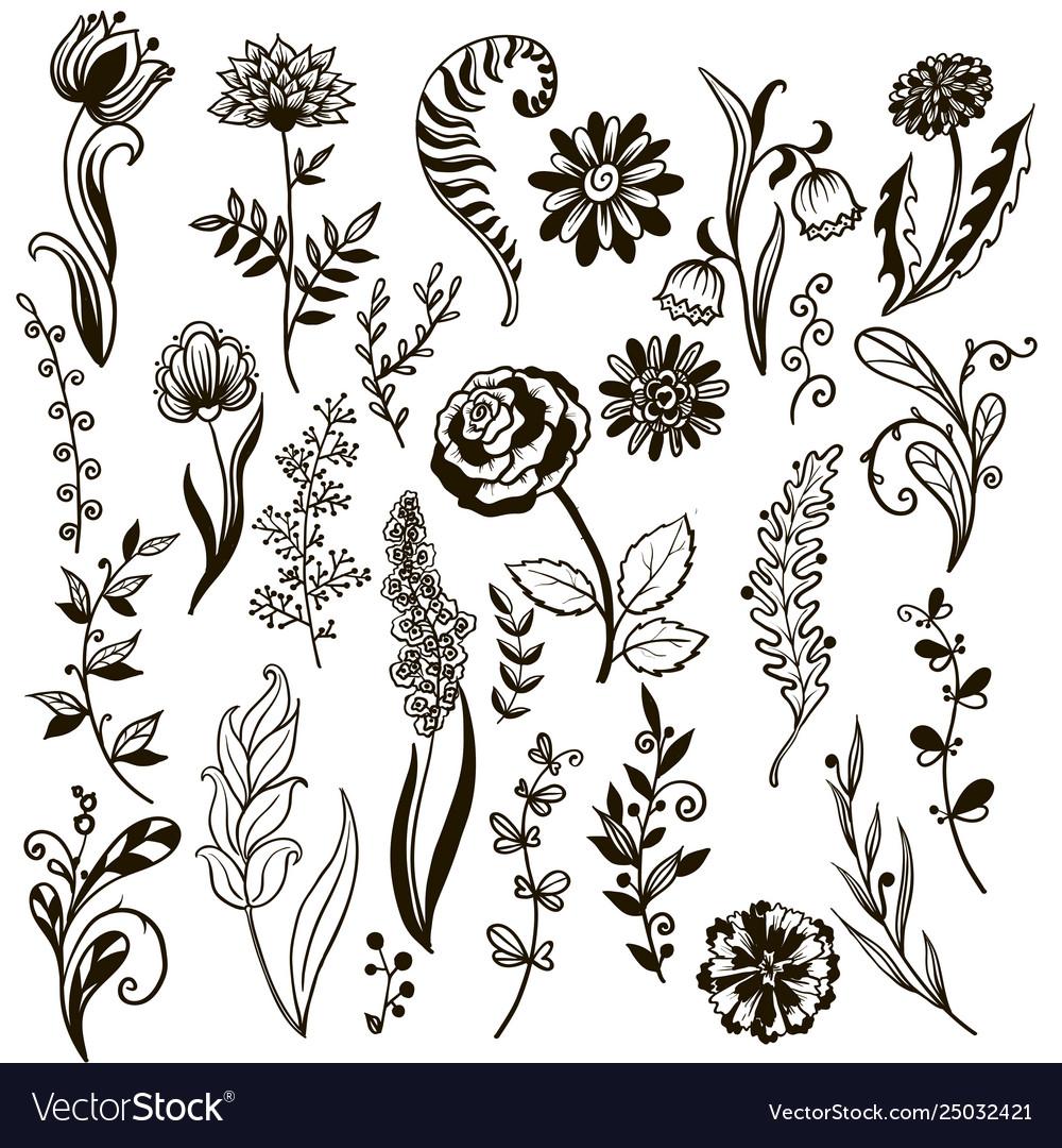 Plants doodle herbs flowers