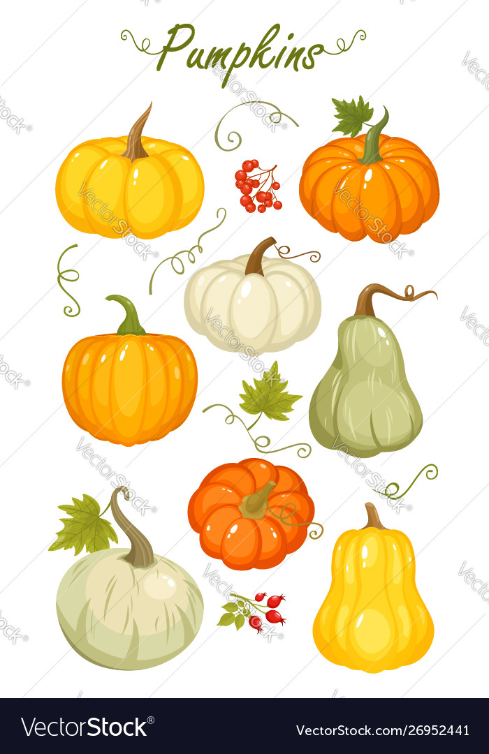 Cartoon autumn pumpkins
