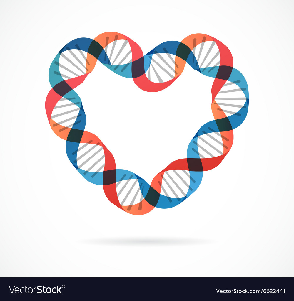 DNA genetic icon - heart vector image