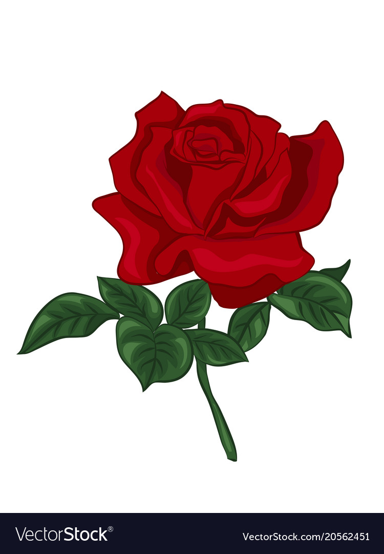 single red rose royalty free vector image vectorstock rh vectorstock com rose vector art free rose vector free