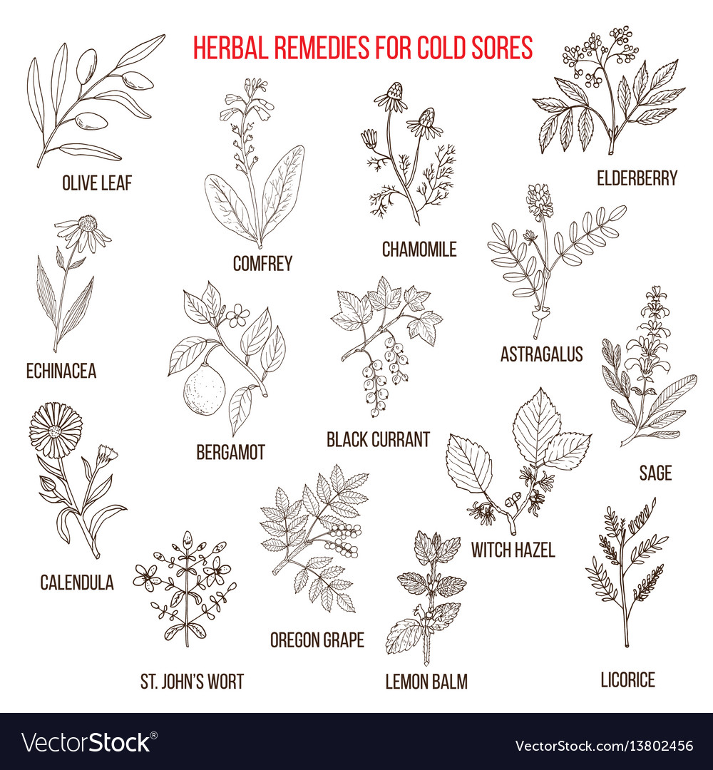 Best herbal remedies for cold sores