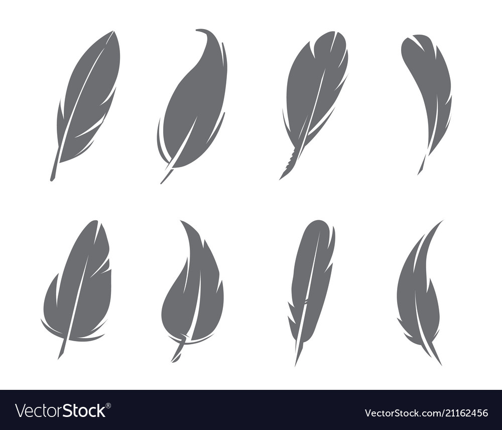 Monochrome pictures of feathers isolate on white
