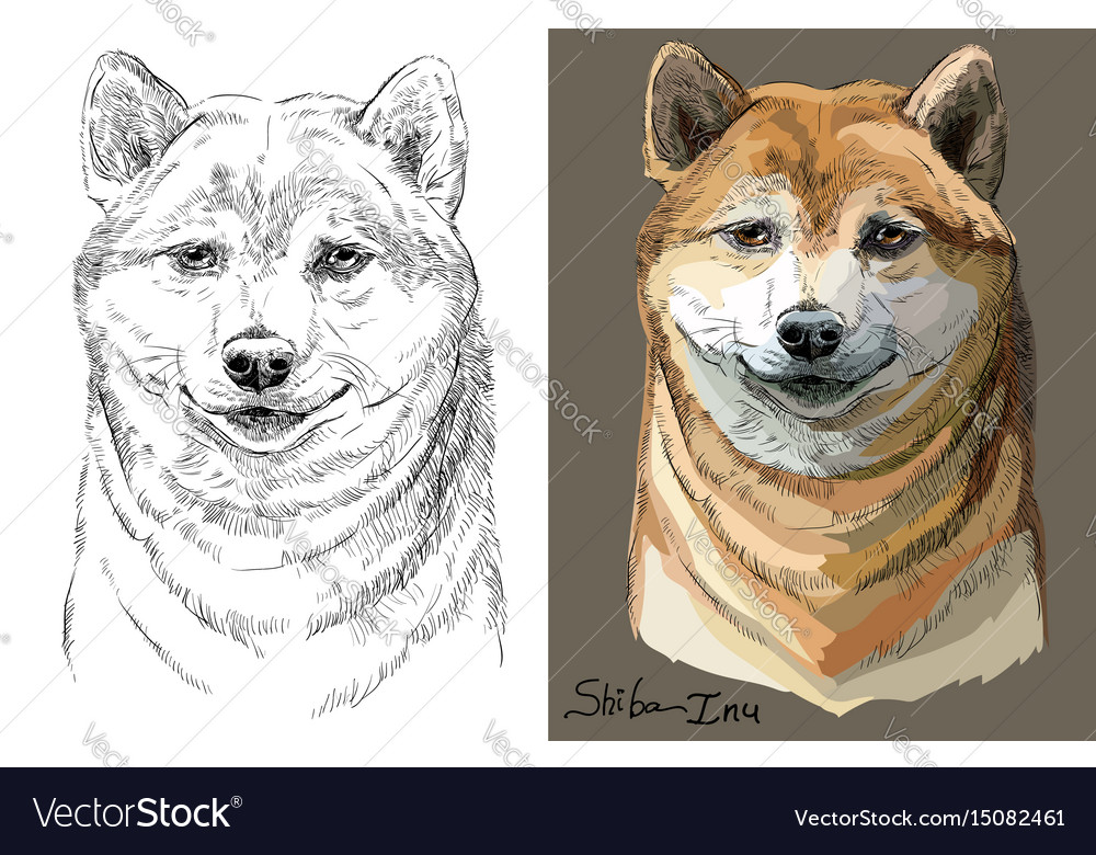 Colored and black and white shiba inu portrait vector image