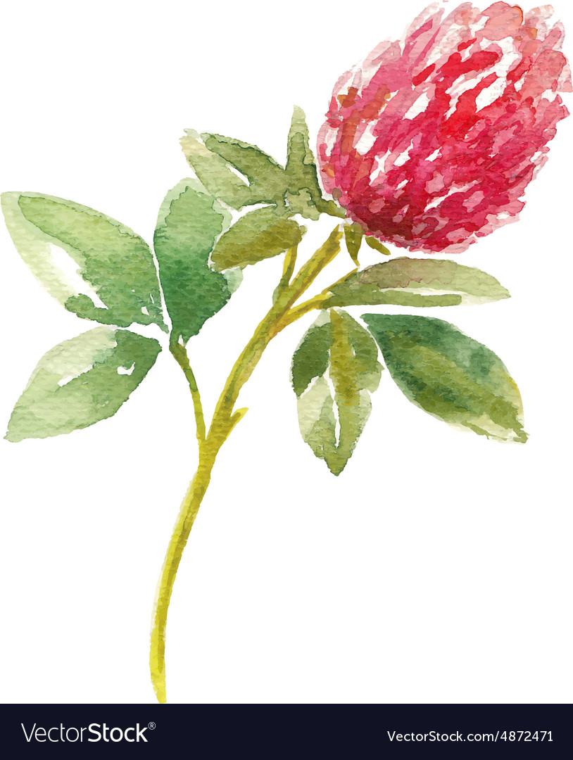 Red watercolor clover field vector image