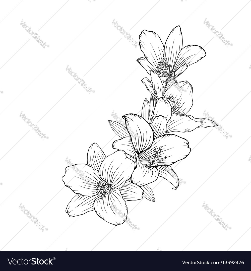 Black and white bouquet lily isolated on