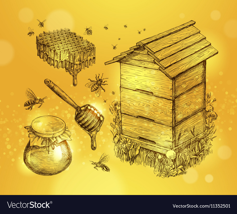 Honey mead beekeeping Hand drawn apiculture