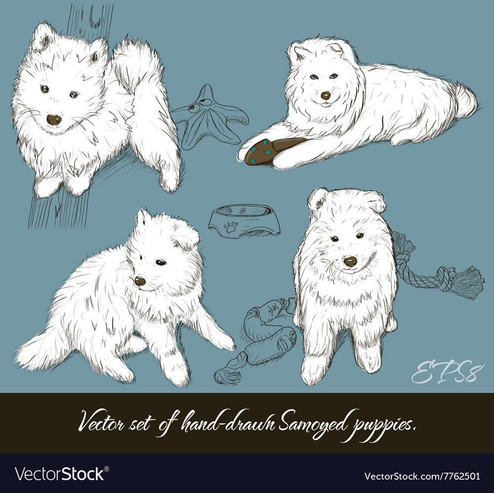 Vintage Set With Samoyed Puppies Royalty Free Vector Image
