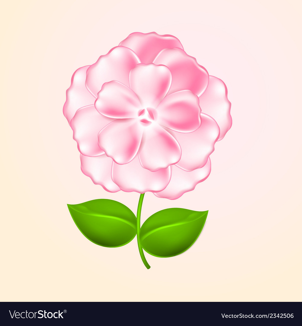 Beautiful Pink Flower Royalty Free Vector Image