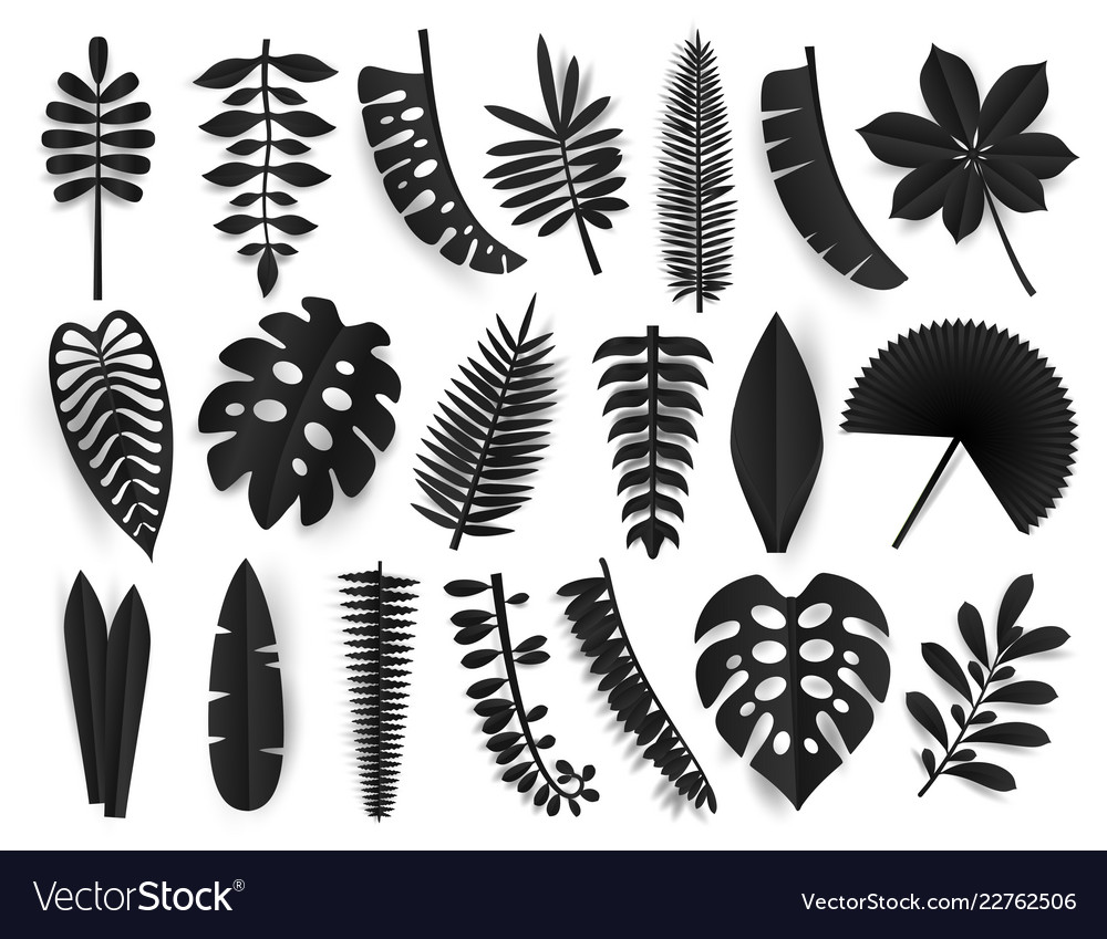 Tropical black paper cut leaves trendy summer