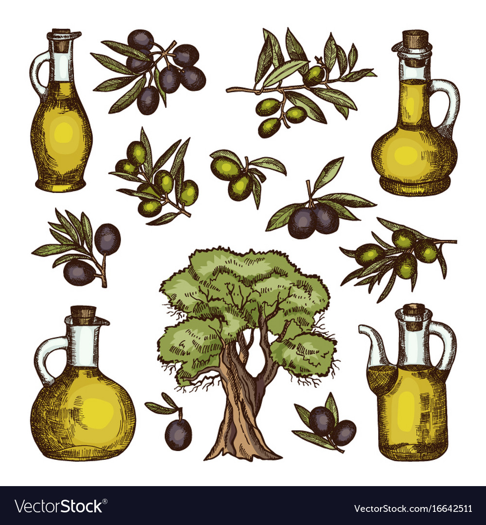 Colored of different olive products