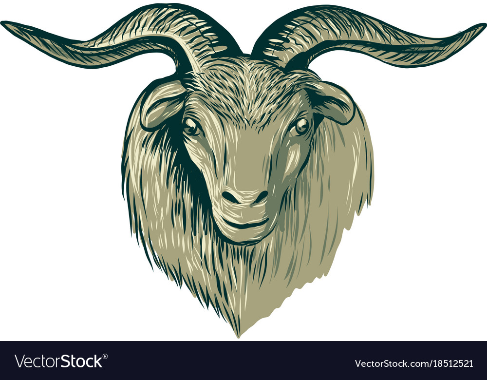 Cashmere Goat Head Drawing Vector Image