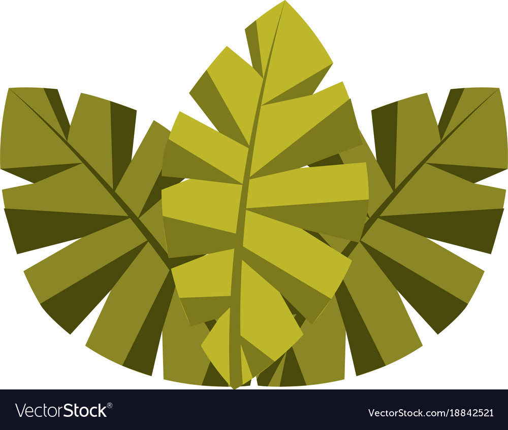 Tropical leaves of palm tree flora image
