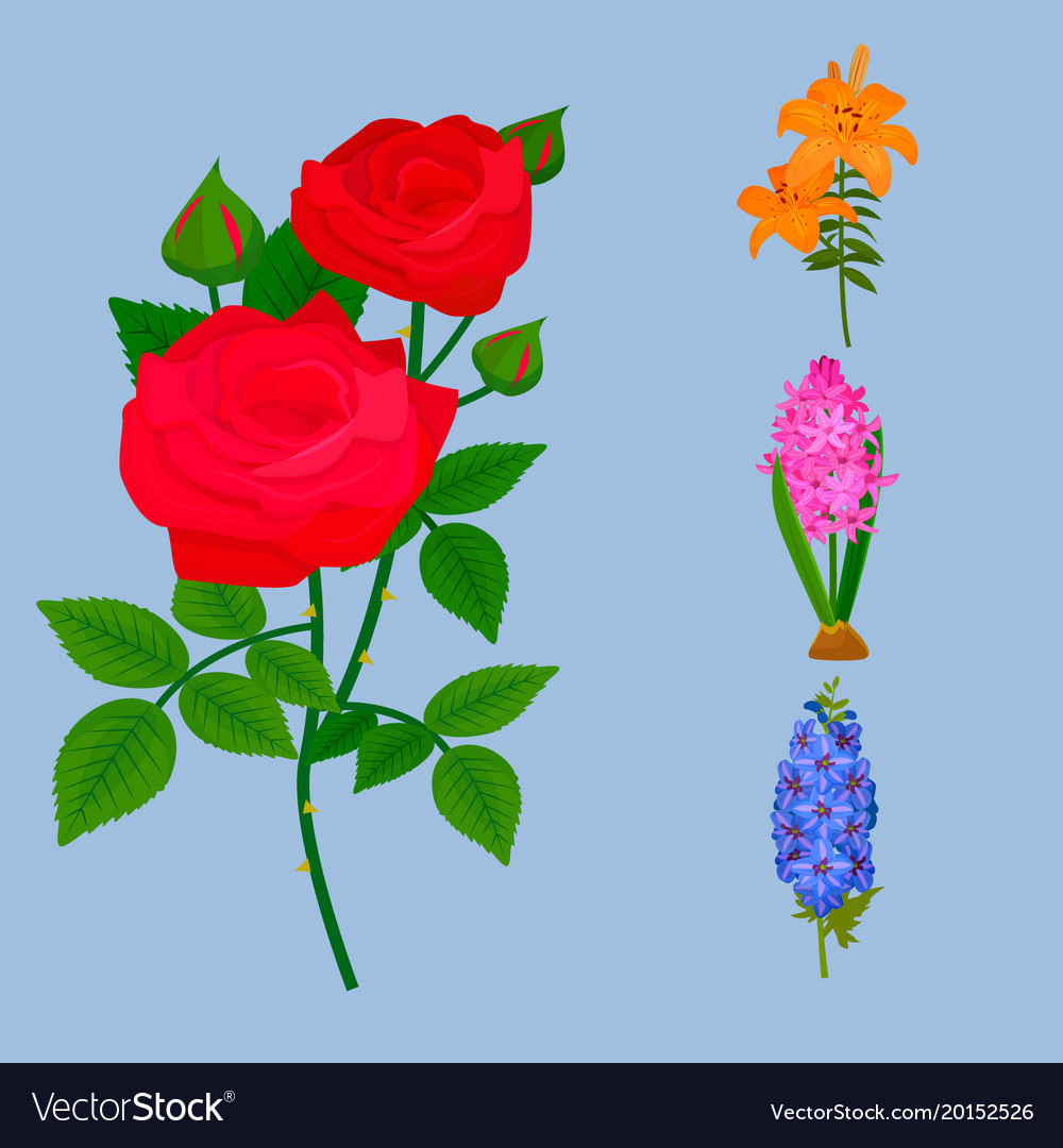 Beautiful Flower Bouquet Design Decoration Vector Image
