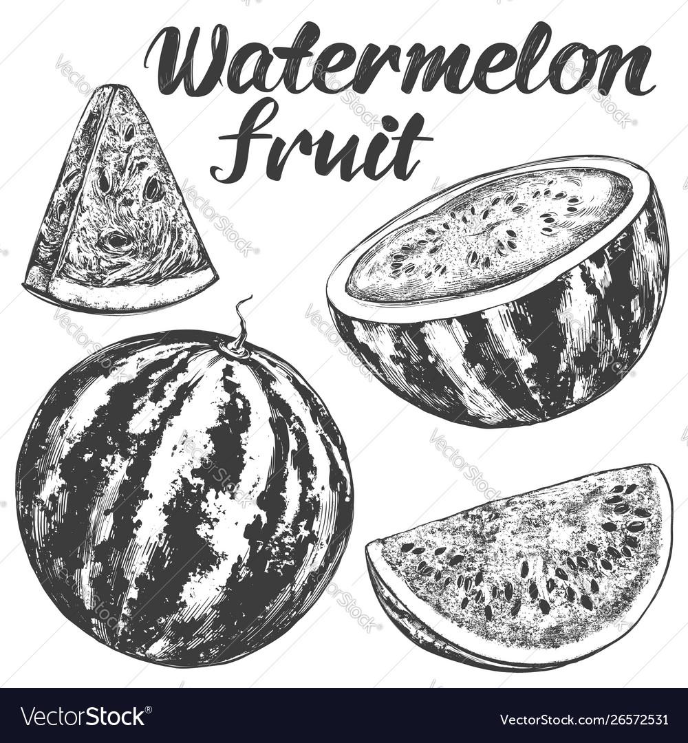 Fruit watermelon hand drawn