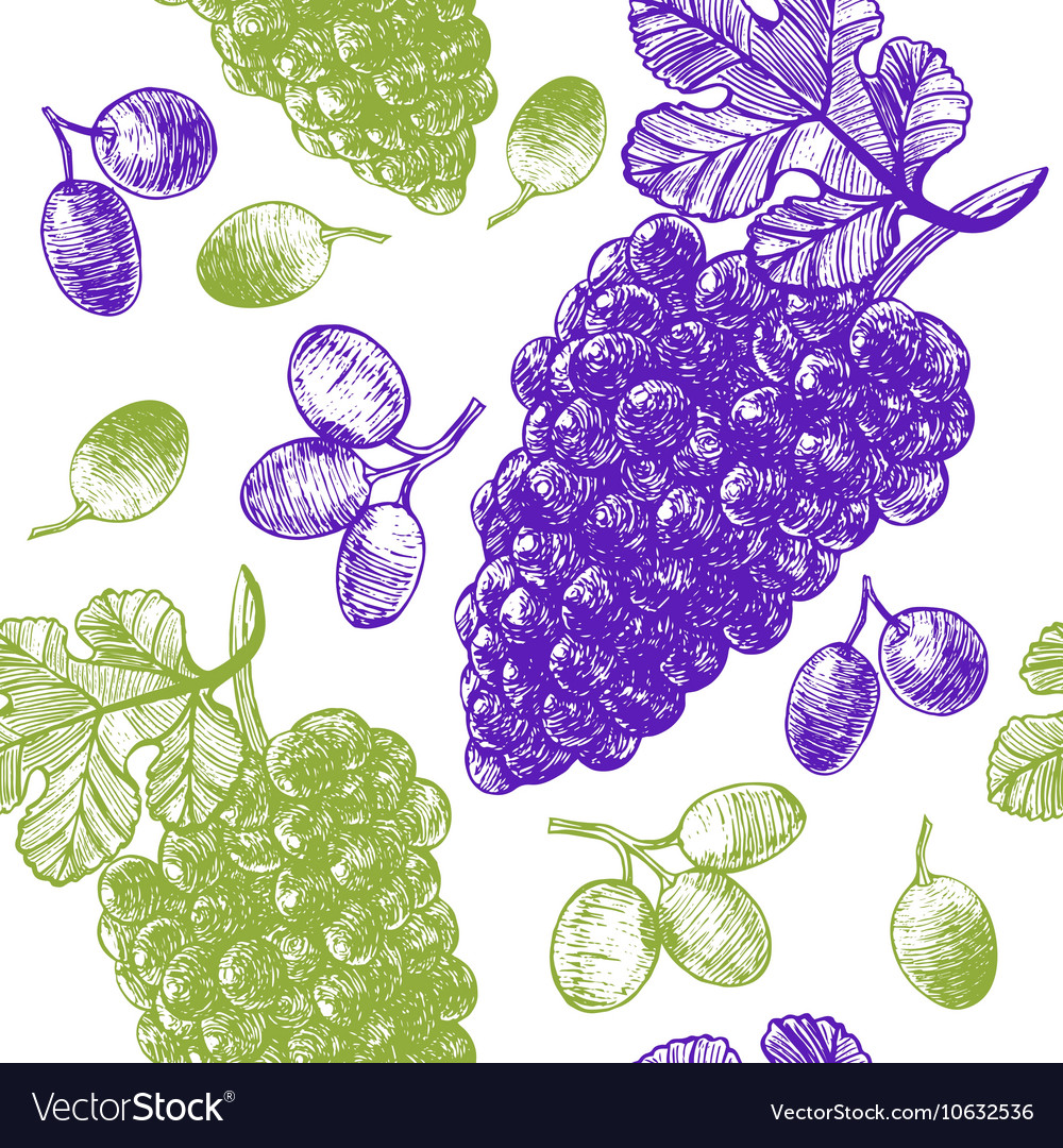 Grape Hand Draw Sketch Background Pattern