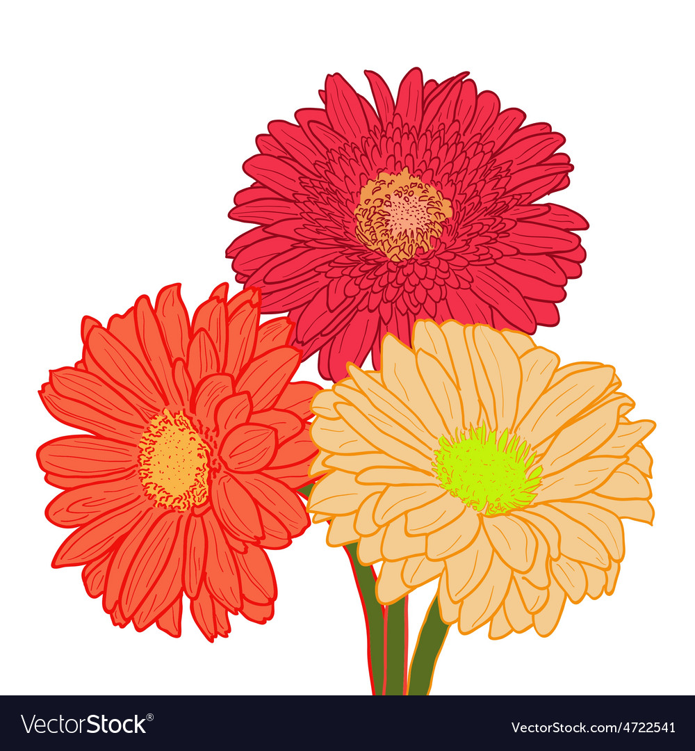 Bouquet of three colorful gerberas Hand drawn