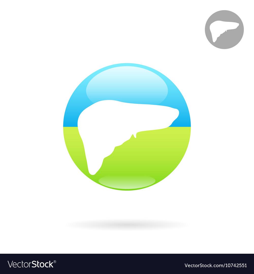 Liver organ flat vector image