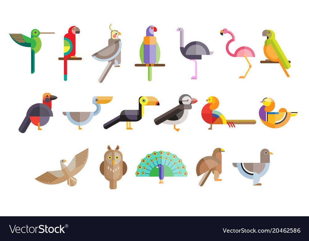 Colorful set of different birds pelican owl