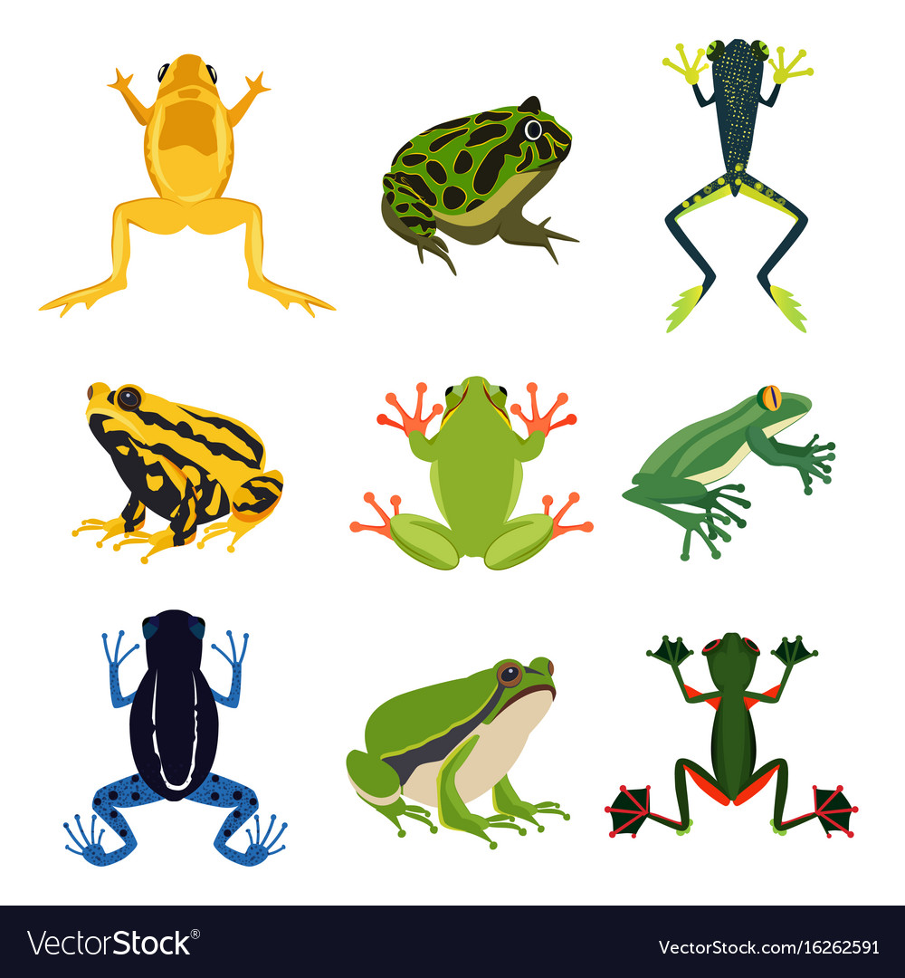 Exotic amphibian set different frogs in cartoon