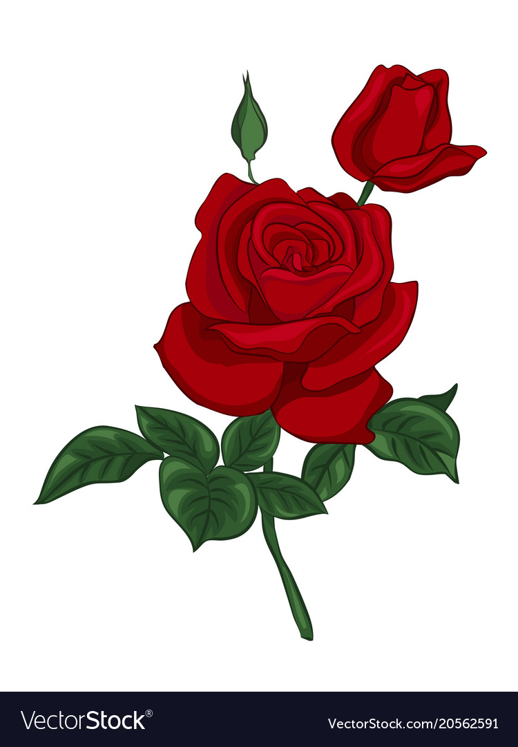 Single red rose Royalty Free Vector Image - VectorStock