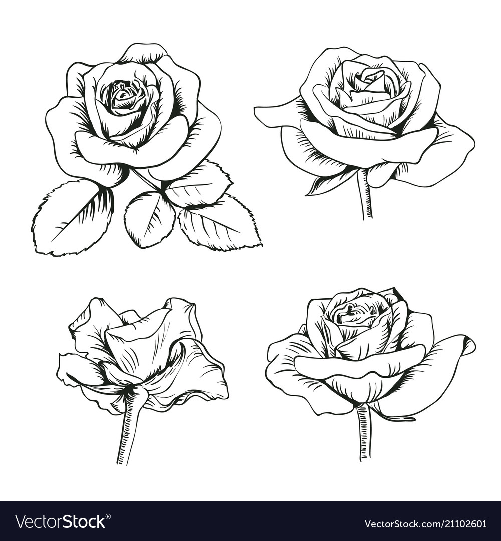 Set collection of enfraved roses with leaves