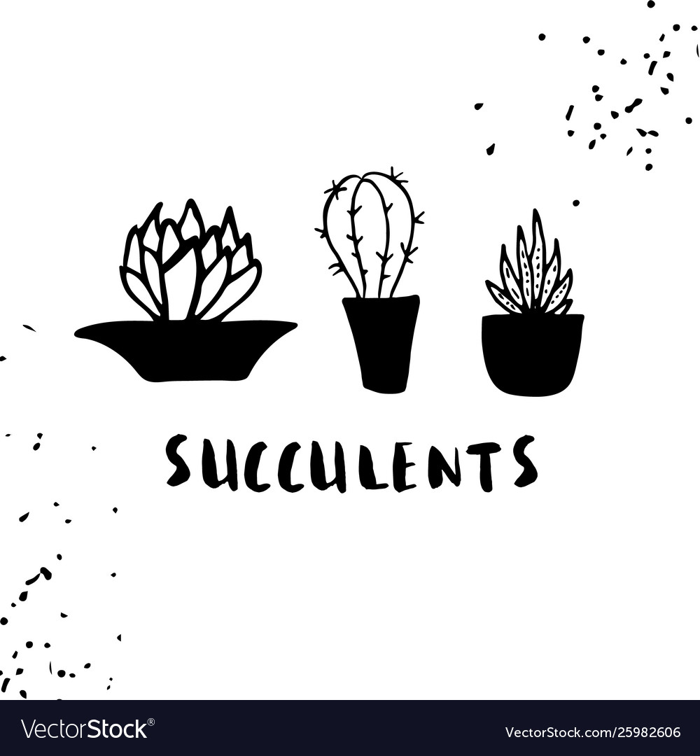 Set cactuses hand drawn