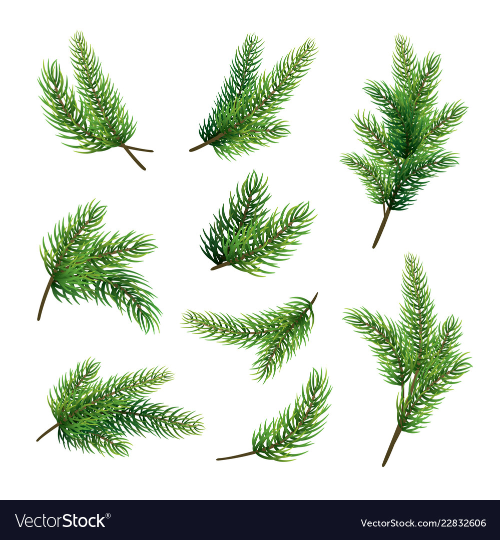 Set of fir branches isolated on white background