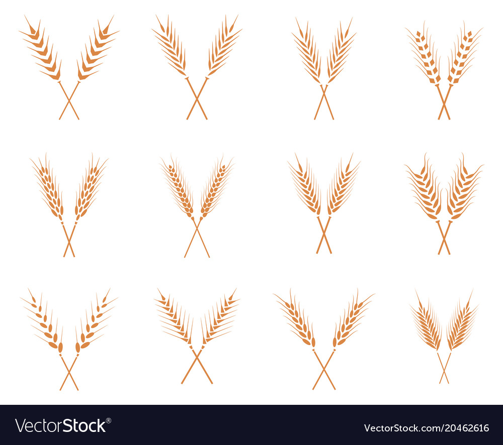 Wheat ears icons set