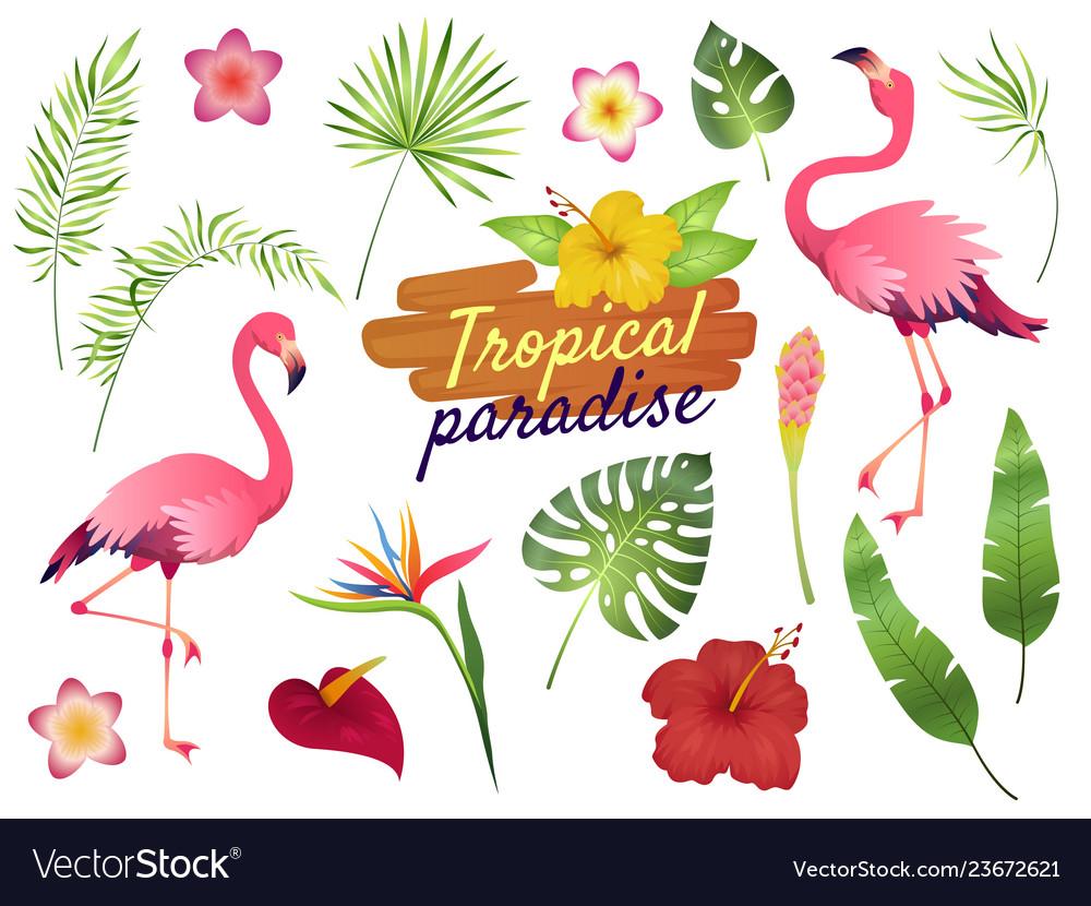 Tropical flamingos pink flamingo jungle flowers
