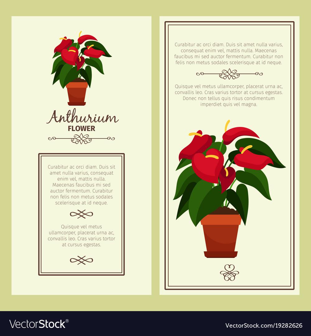 Anthurium flower in pot banners