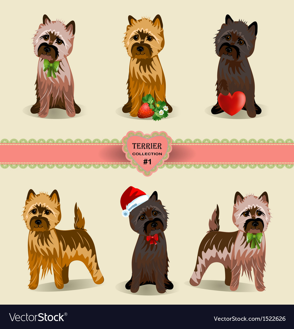 Terrier Collection
