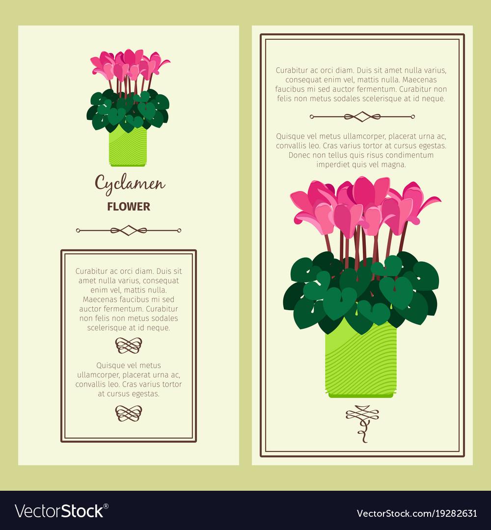 Cyclamen flower in pot banners vector image