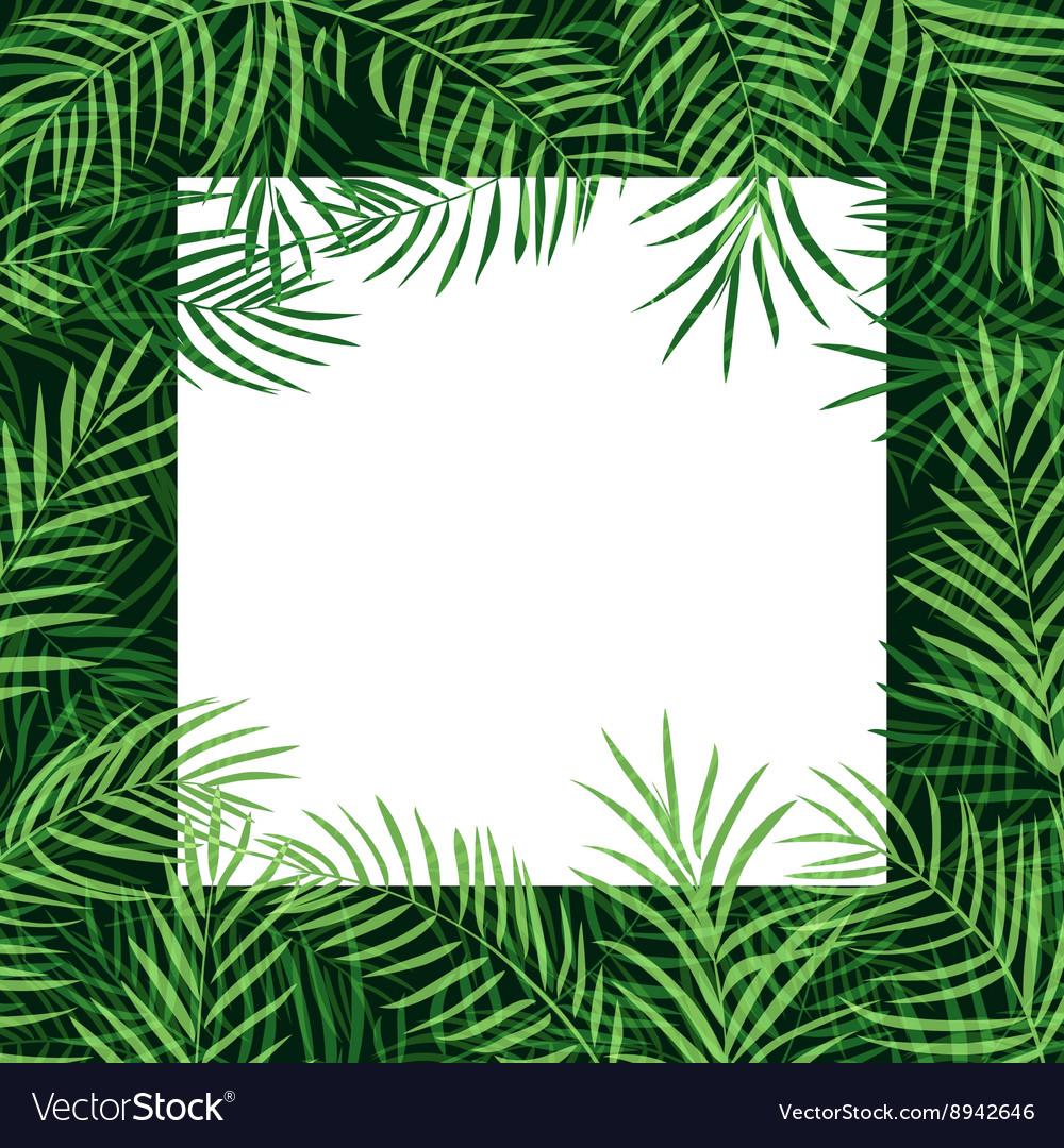 Border frame tropical palm leaf Royalty Free Vector Image
