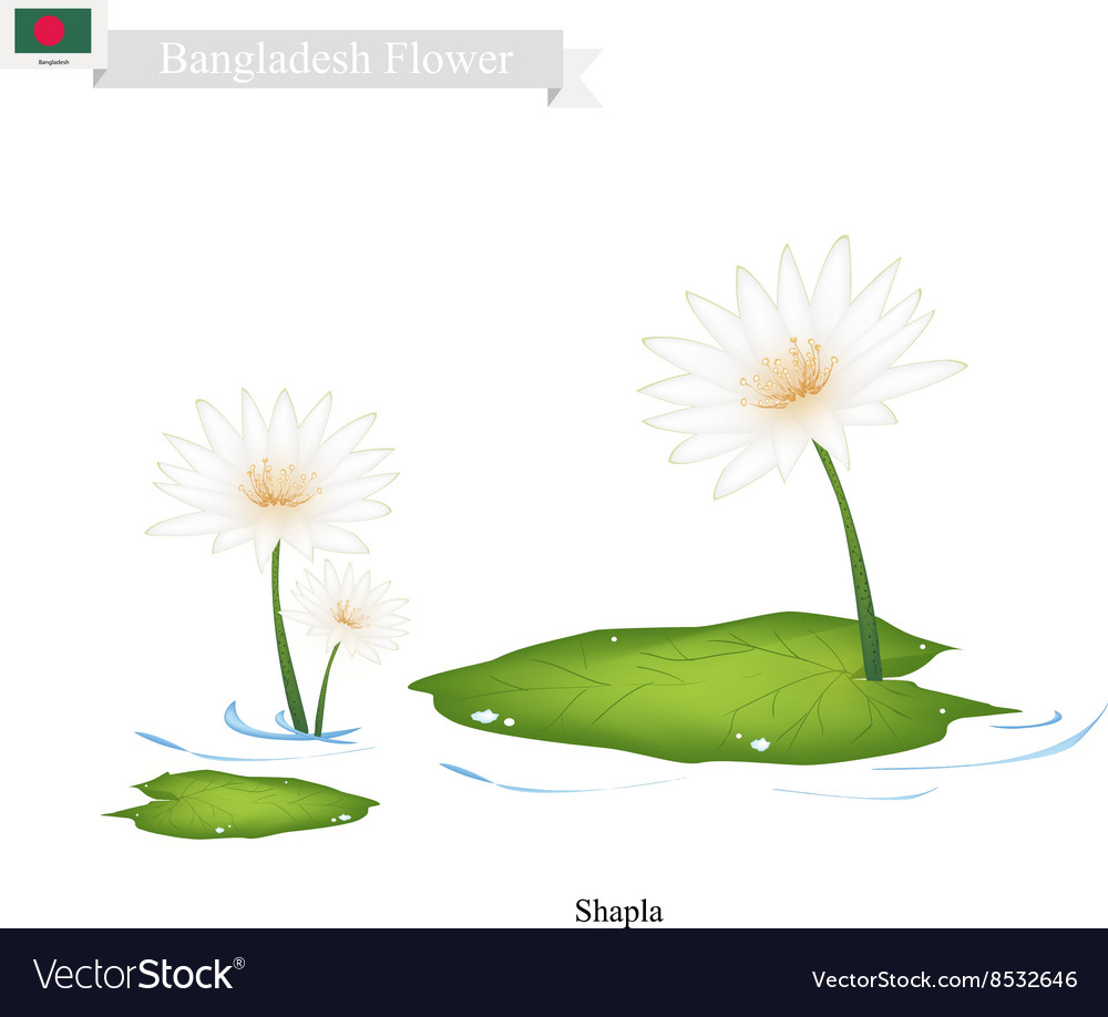 Shapla or Water Lily The National Flower of Nepal