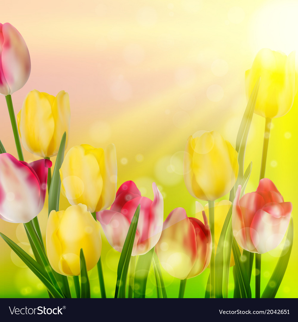 Beautiful Spring Flowers Eps 10 Royalty Free Vector Image