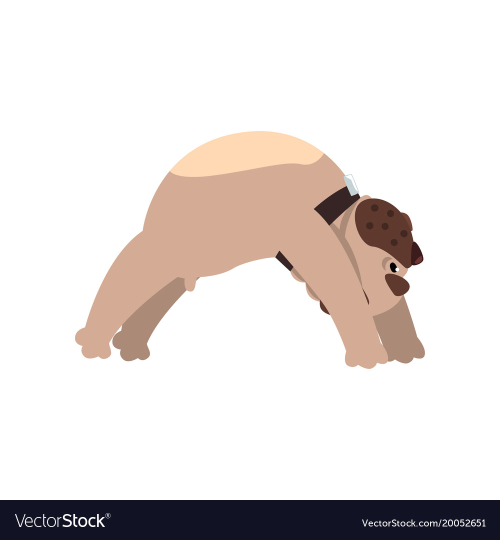 French Bulldog Doing Yoga Bridge Pose Funny Dog Vector Image