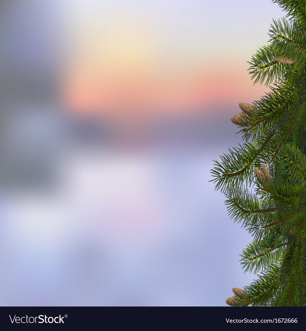 Branches of fir on winter background