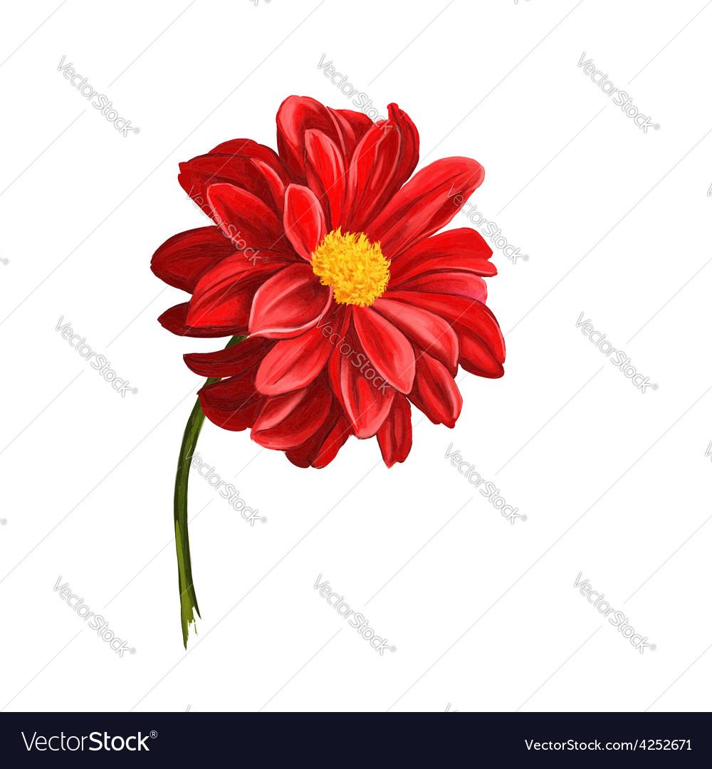 Dahlia Flower Hand Drawn Royalty Free Vector Image