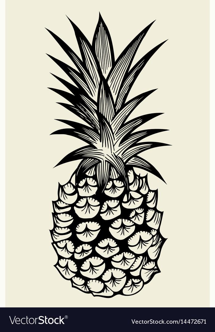 Pineapple fruit hand drawn vector image