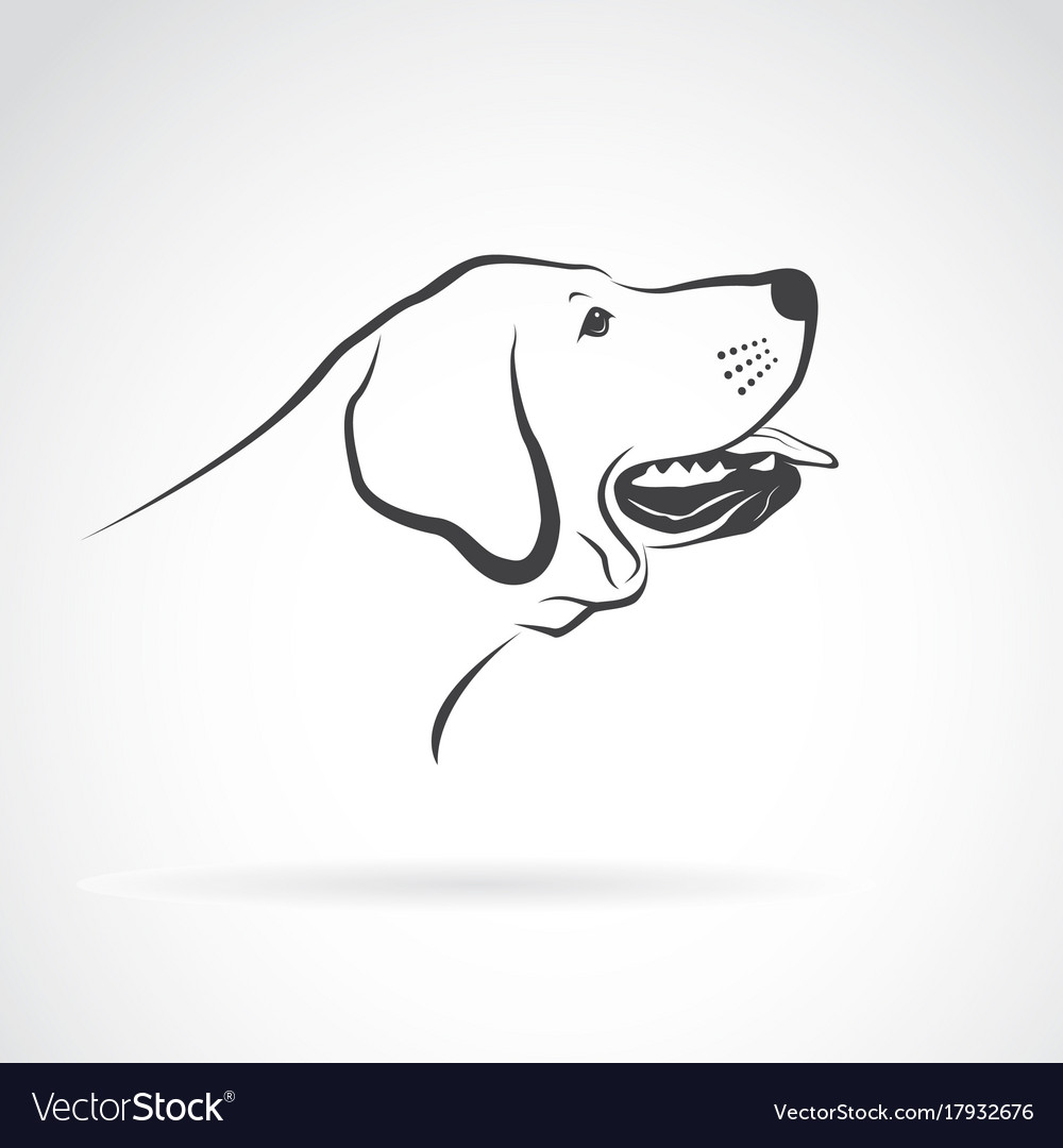 Labrador dog head on a white background pet vector image