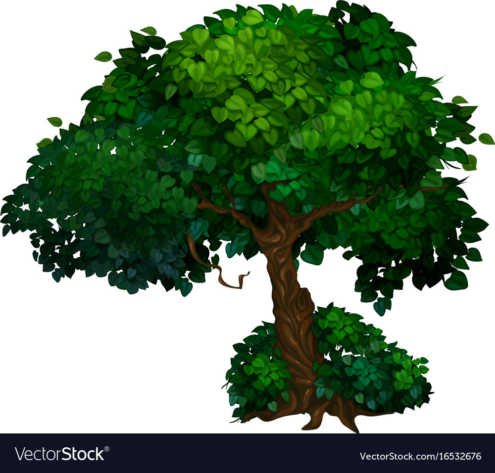 Tree with twisted trunk and green crown of leaves