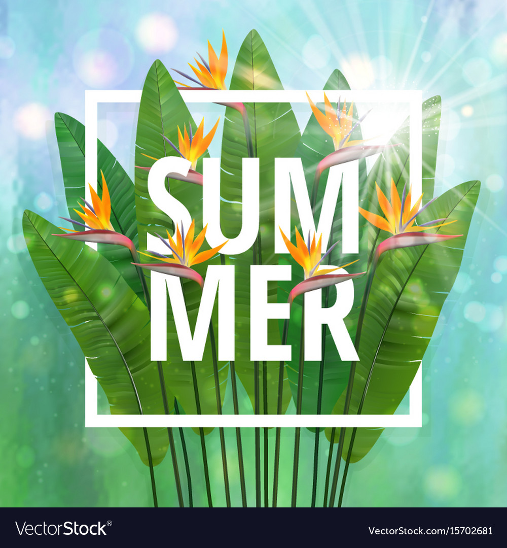 Summer typographical background with tropical