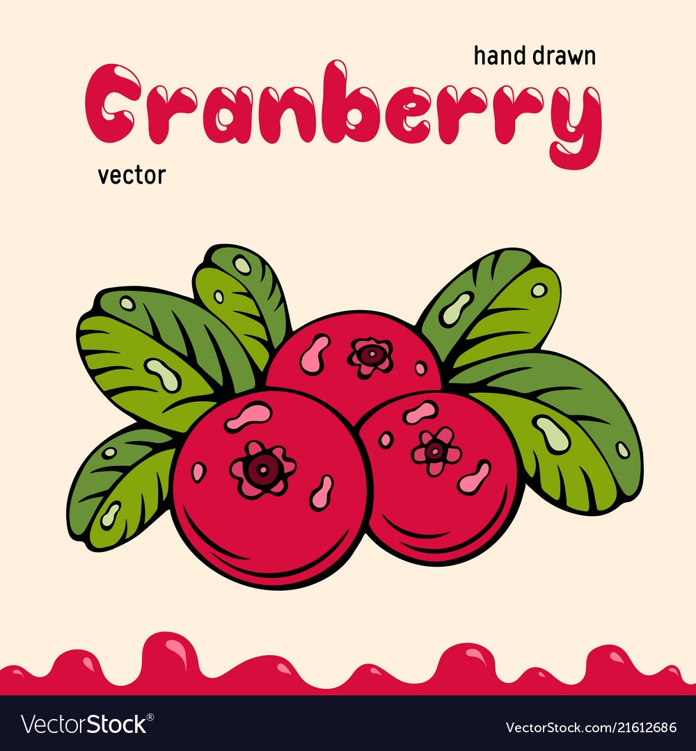 Cranberry berries images