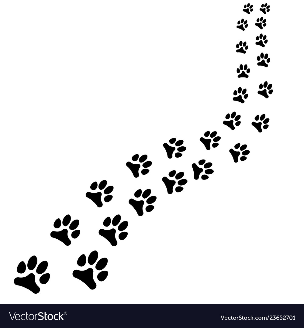 81866f203160 Path of animals black footprints dog or cat path Vector Image