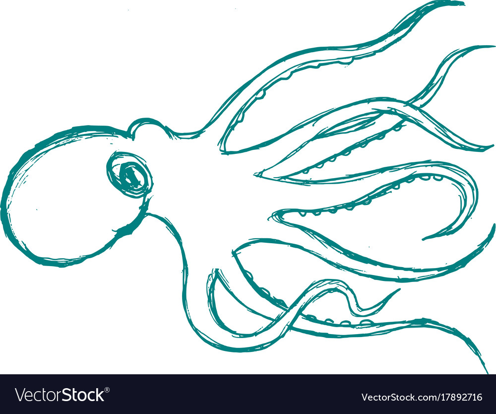Octopus animal from ocean vector image