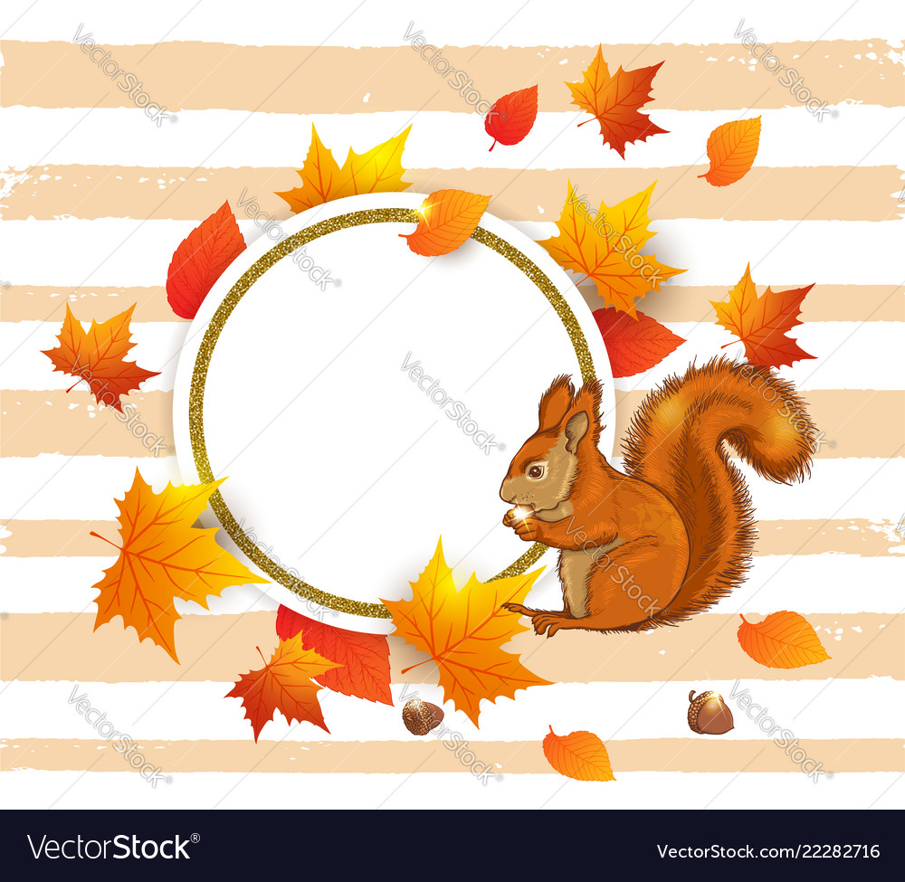 Squirrel and orange maple leaves